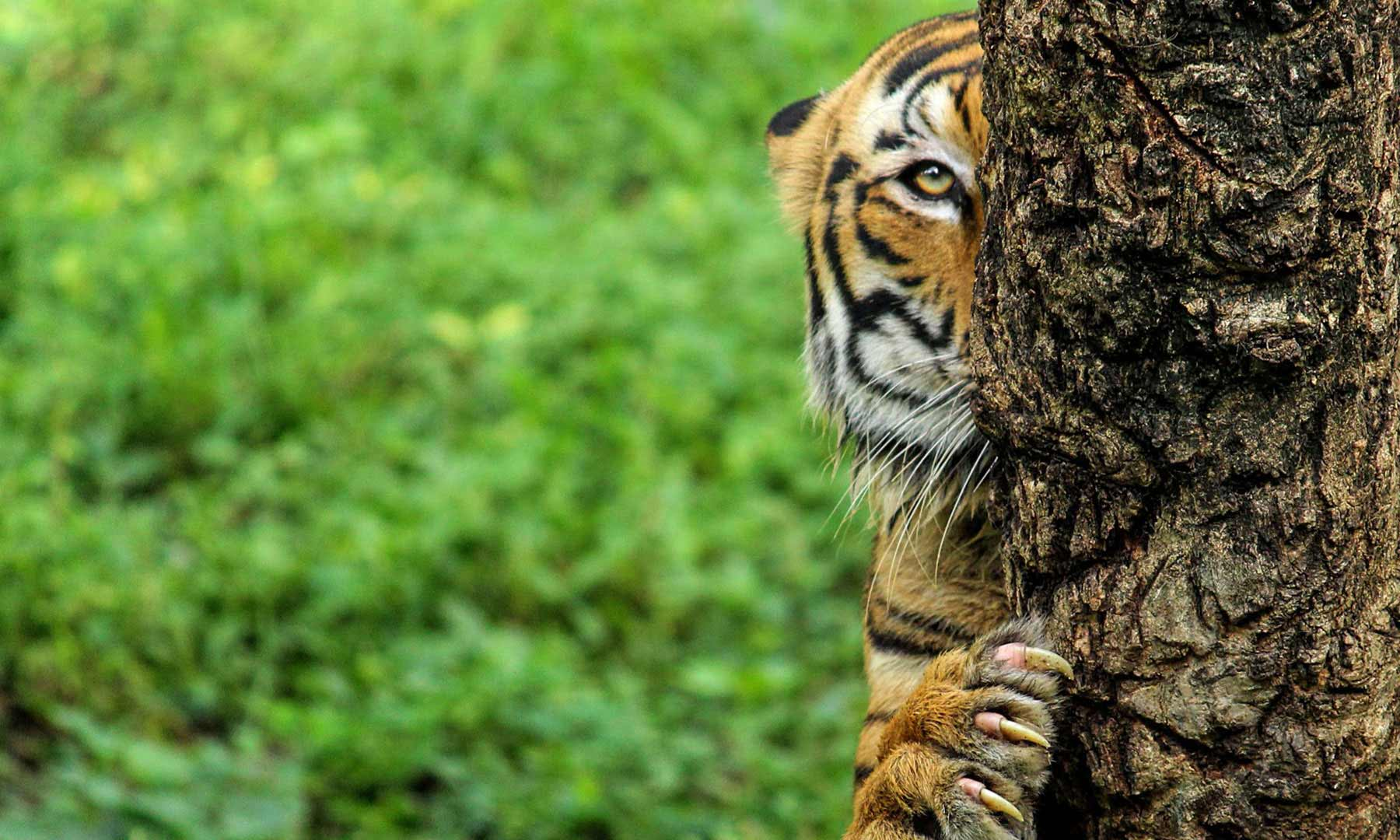 Come experience Pench National Park & a chance to meet Sher Khan !