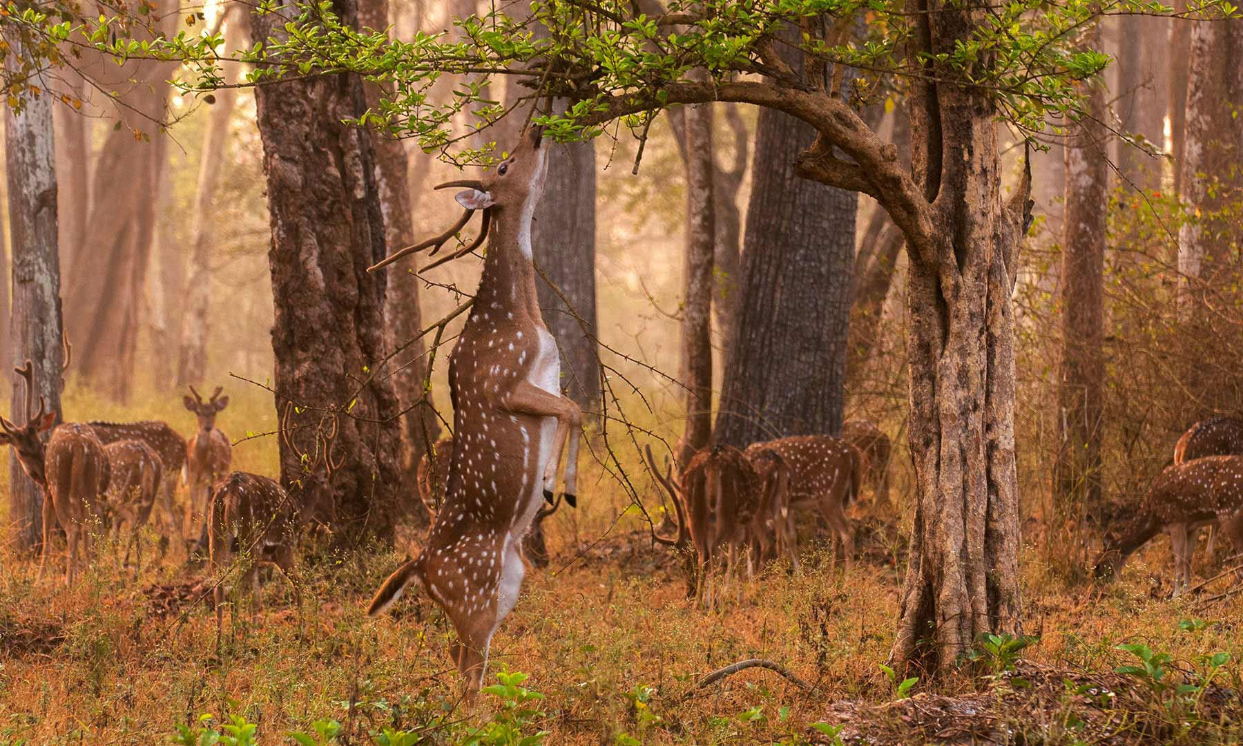 Pench National Park - Return to Nature